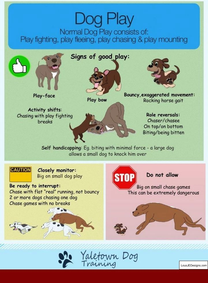 Clicker Training Dogs Stop Biting And Pics Of How To Train Your