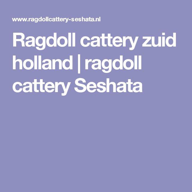 Ragdoll cattery zuid holland | ragdoll cattery Seshata