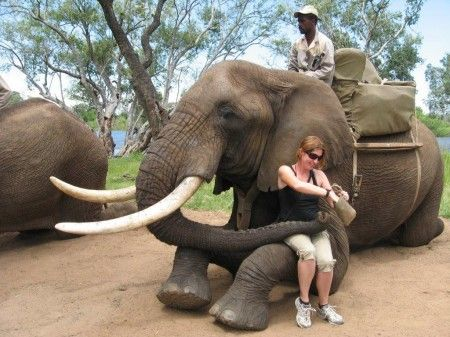 Elephant experience with Saf Par in Zambia close to the town of Livingstone