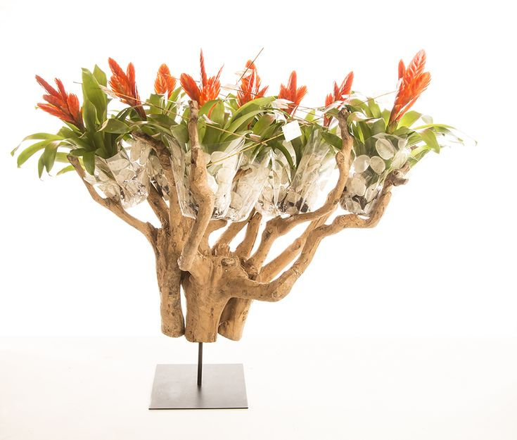Vriesea Oberon design: a flowering tree with stunning redheads as colorful treetops. A design made by Pim van den Akker as part of the video 'The art of Bromeliad'.
