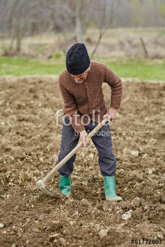 """Download the royalty-free photo """"Senior man sowing potatoes"""" created by xalanx at the lowest price on Fotolia.com. Browse our cheap image bank online to find the perfect stock photo for your marketing projects!"""