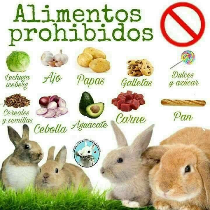 Pin En Conejos