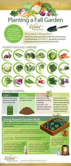 Planting a Fall Vegetable Garden -- What to plant, how, and when. [Infographic]