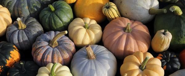 Growing Pumpkins Pumpkins are the definition of the Autumn season, as well as asymbol for the popularly celebrated holiday, Halloween! As you know, pumpkins ar