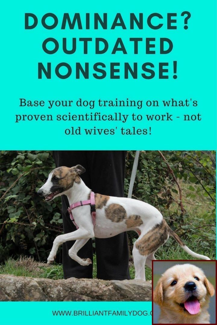 House Training A Puppy In Apartment And Dog Training Courses