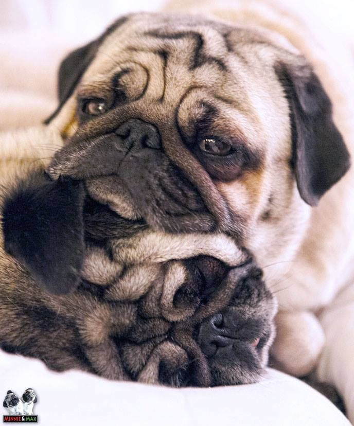 Best Happy Images On Pinterest Dogs Funny Animals And - 20 ridiculously squishy dog cheeks that will make your day