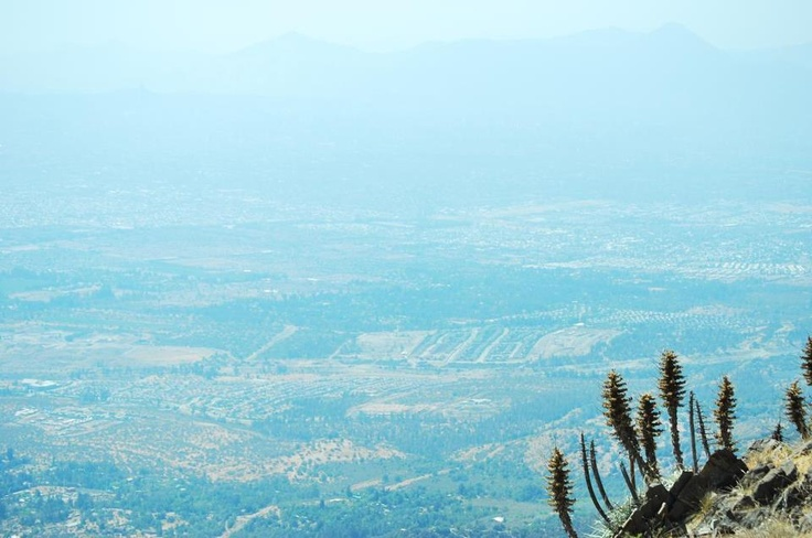 Chaguales del cerro Minillas