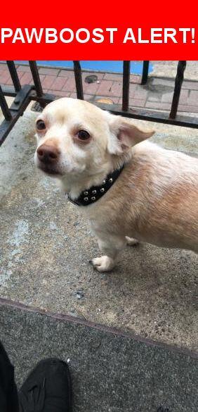 Please spread the word! Chico was last seen in Gloucester City, NJ 08030.    Nearest Address: Near Essex St & N King St