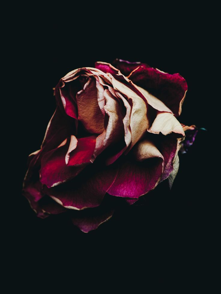 Beautiful Photographs of Decaying Flowers by Billy Kidd