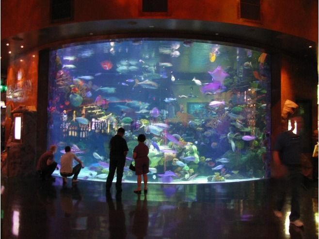 casino in vegas with aquarium