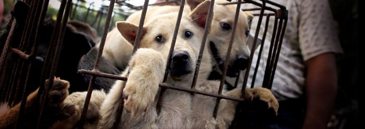 Add your name to save thousands of pups from being tortured to death, skinned, then eaten at a festival in Yulin, China.