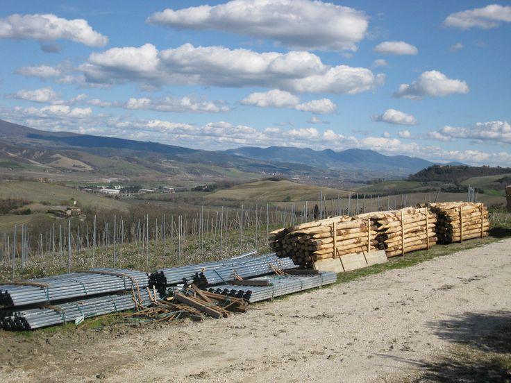 New vineyard - Le Caselle  www.oliocimicchi.com/en/le-caselle-aggiornamento-buona-pasqua/