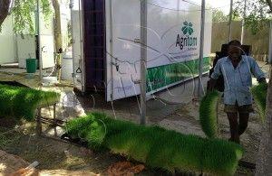 Agritom fresh fodder machine on desert