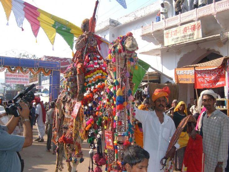 ユーラシアで行くインドツアー プシュカルのラクダ祭りを見学