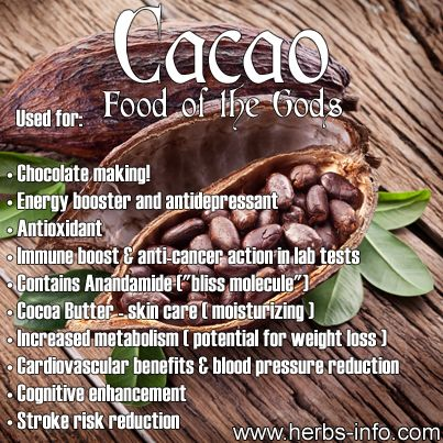 Herb Of The Day: Cacao