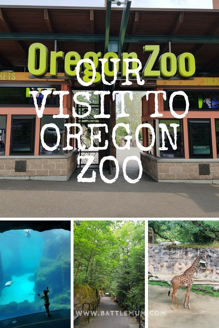 our visit to oregon zoo - pinterest pin