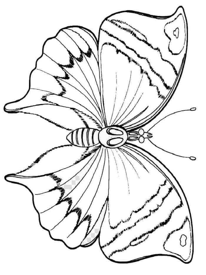 Images Coloring Pages Butterfly Butterfly Coloring Page Coloring Pages Animal Coloring Pages