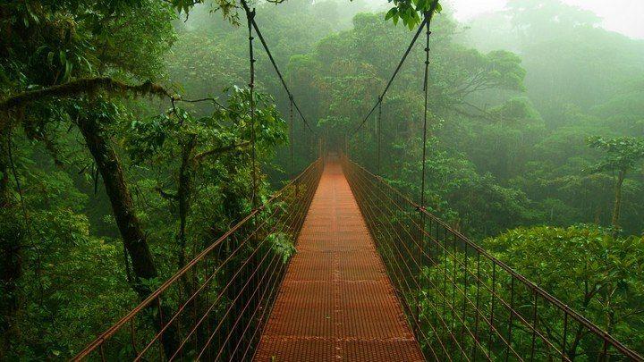 Kosta Rika Yağmur Ormanları #kostarika #resimler http://www.resimbulmaca.com/doga-resimleri-/resimleri/kosta-rika-yagmur-ormanlari.html
