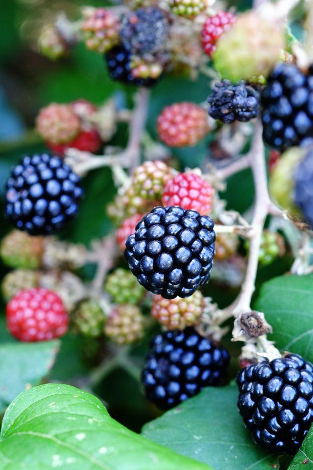 More di rovo - GranoSalis - Blog di cucina naturale e consapevole