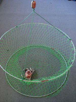 19 best diy crab lobster traps images on pinterest crab for Fishing pole crab trap
