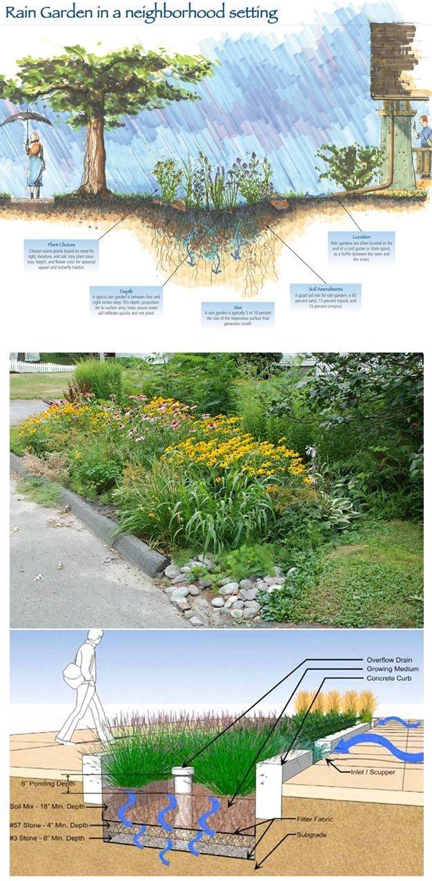 What is a Rain Garden.. & http://en.wikipedia.org/wiki/Rain_garden & soaker system http://www.pinterest.com/pin/461056080574917059/