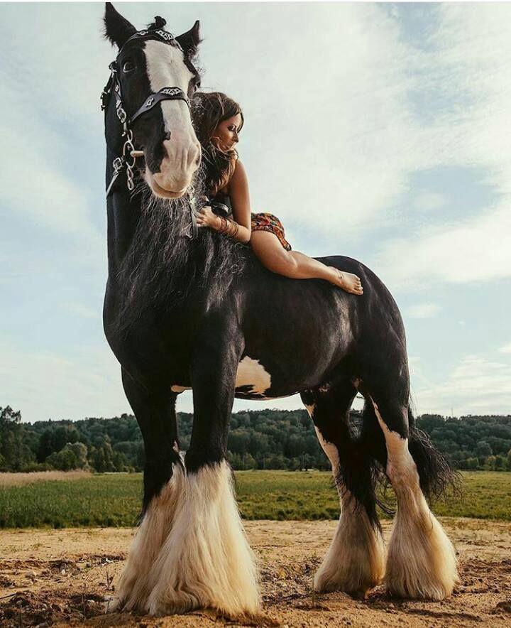 Bild könnte enthalten: eine oder mehrere Personen, Pferd, Himmel, im Freien und Natur
