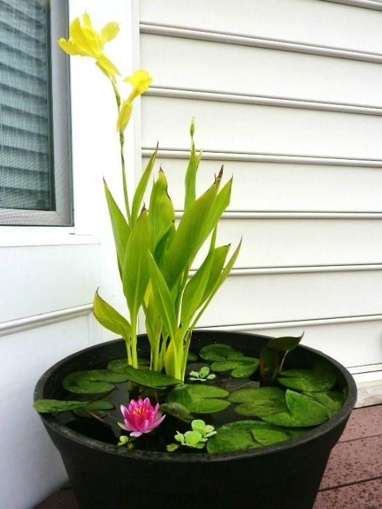 Breng de lente in je tuin met buitenkleden, gekleurde potten, tuinverlichtig, een waterelement en veel kleur.