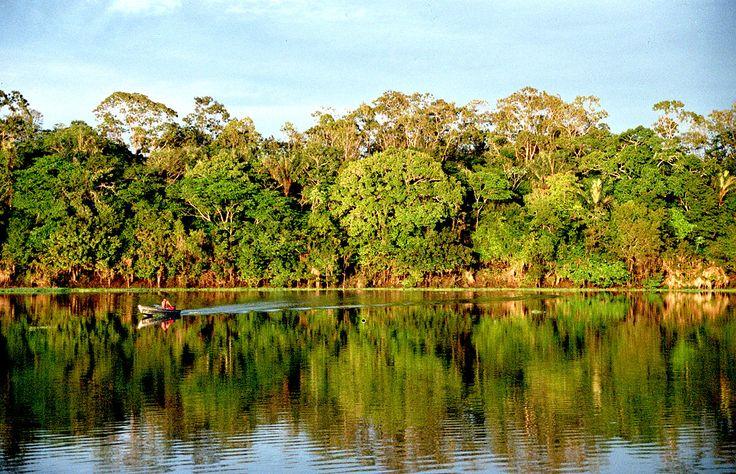 Domstol i Brasilien stoppar presidentens utförsäljning av Amazonas | Natursidan