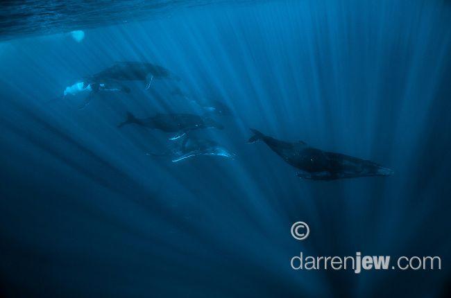 1448944_darrenjew.jpg   Darren Jew Photographer