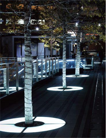 樹木を照らす床埋め込みのツリーサークル照明。