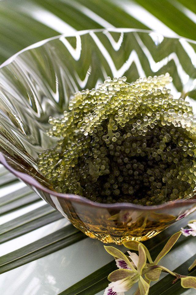 沖縄で新発見! 海ぶどうの新しい食べ方. Umi budo. Sea Grapes, a kind of sea weed.