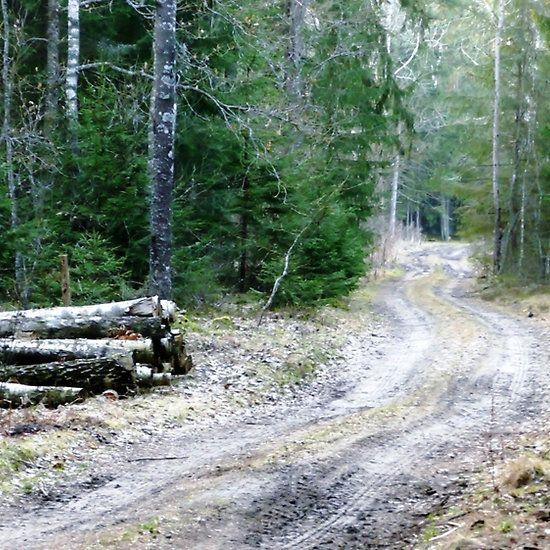 Old Lumberjack road .
