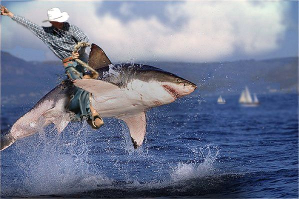 This Is How We Ride Sharks In Colorado Shark Week On