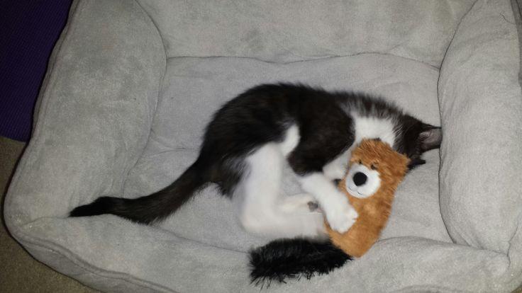 Our little cute Figy as a kitten!