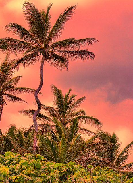 Crooked Palm Tree, Oahu, Hawaii. To visit Oahu Hawaii, next year.