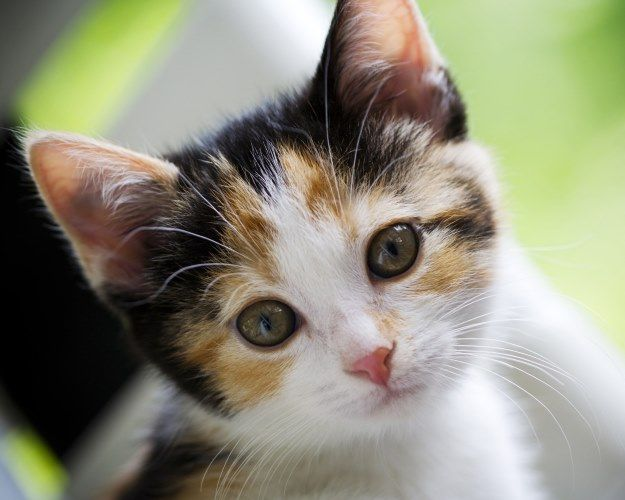 Names for Female Cats
