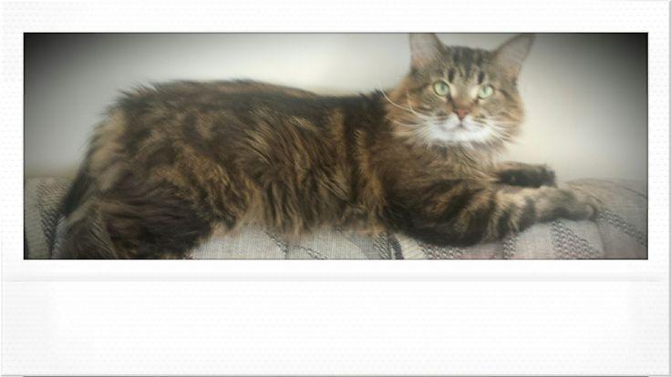 Wakey wakey baby💕 Albus Severus #harrypotter #cats #albusseverus