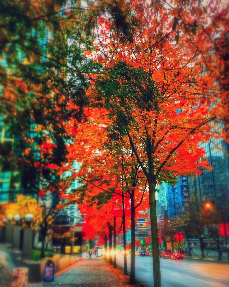 Fall in Vancouver -