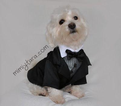 perro con traje