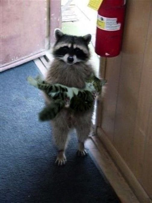 """""""Is this your cat?"""""""