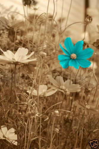 aqua flower dreamer wallpapercyan - photo #10