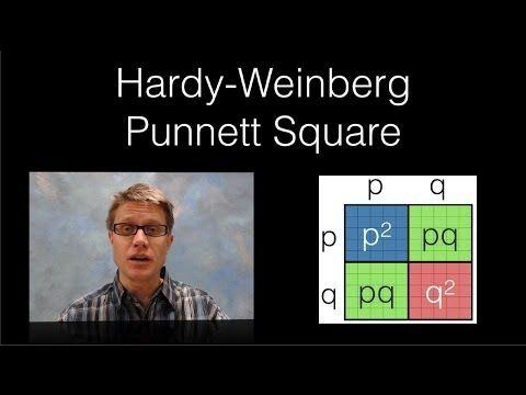 Hardy-Weinberg Punnett Square - YouTube