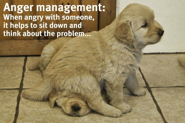 Anger ManagementDogs Pics, Funny Dogs, Funny Pictures, Management Tips, Shelters Dogs, Funny Animal, Anger Management, Android App, Golden Retriever