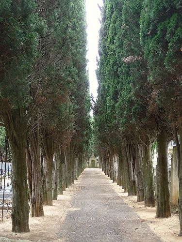 80 best images about Cypress Trees on Pinterest | Italian ...