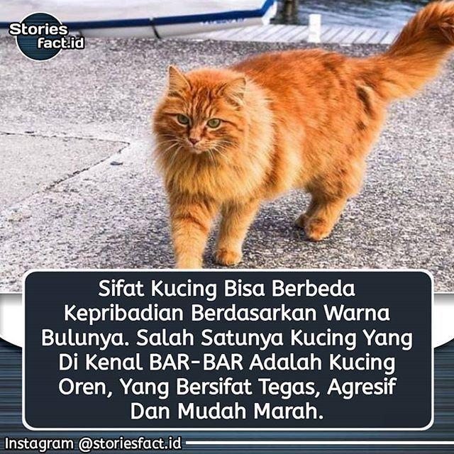 Warna Bulu Kucing Memang Tak Terlalu Banyak Namun Motif Corak Serta Letak Spot Warna Pada Bulu Kucing Sangatlah Banyak Bisakah Kucing Putih Kucing Warna