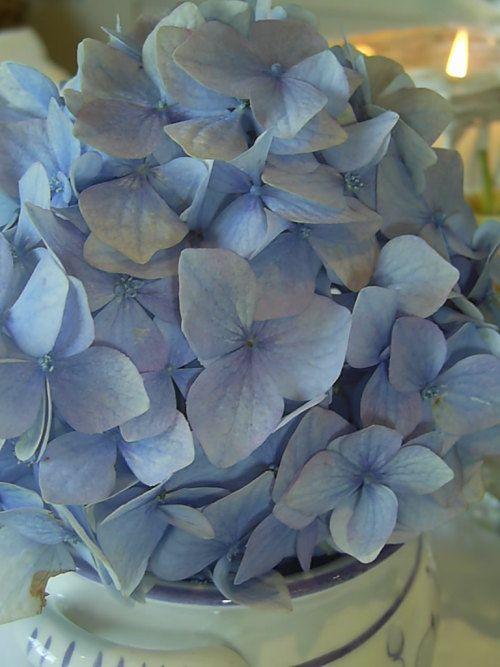 Google Bilder-resultat for http://emmelines.blogg.no/images/hortensia_1187960314.jpg
