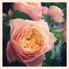 Vuvuzela Rose Bramble And Wild Floral Emporium Wed Pinterest