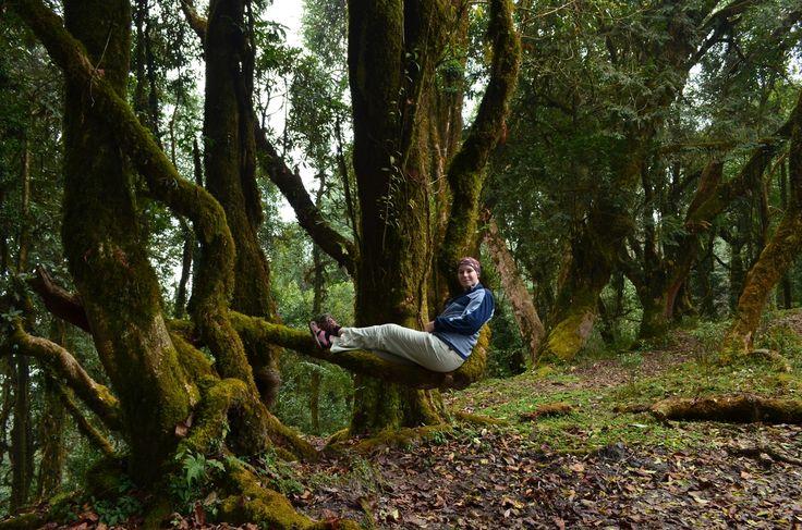 Forest Camp место где вдоволь можно насладиться джунглями и почувствовать себя лесным человеком.   С уважением к приключениям, команда hikeup.net