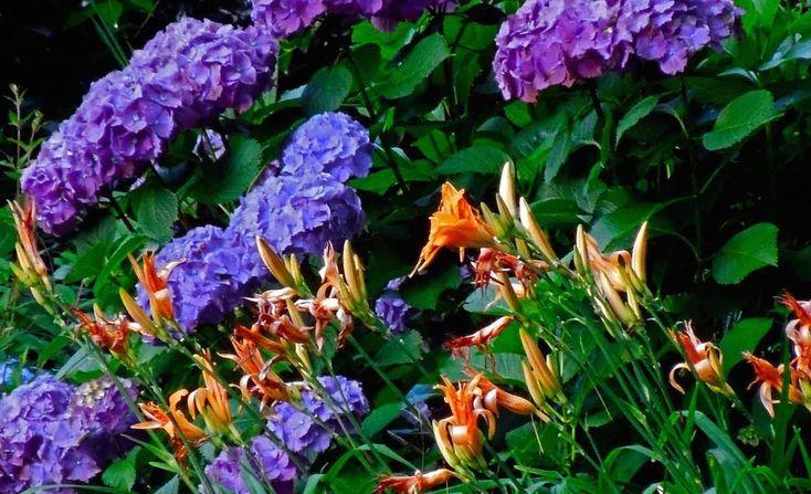 goerge-tindale-memorial-garden01