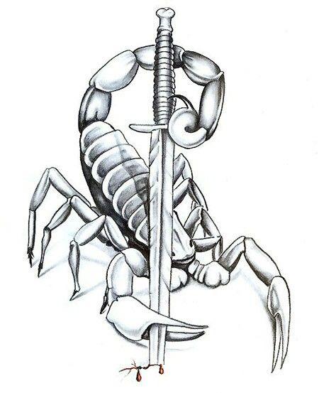 scorpion drawing tattoo artists org
